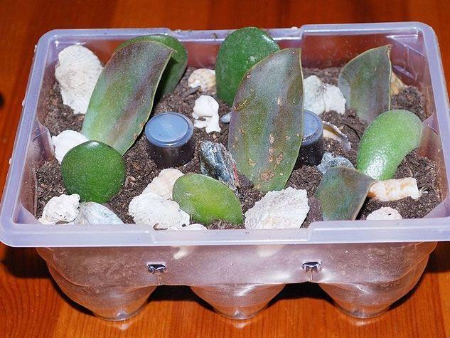 Creiamo un mini giardino zen con materiali di recupero - Giardino zen in miniatura ...