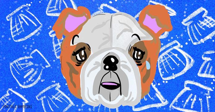 il cane e le conchiglie