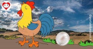 il gallo e la perla