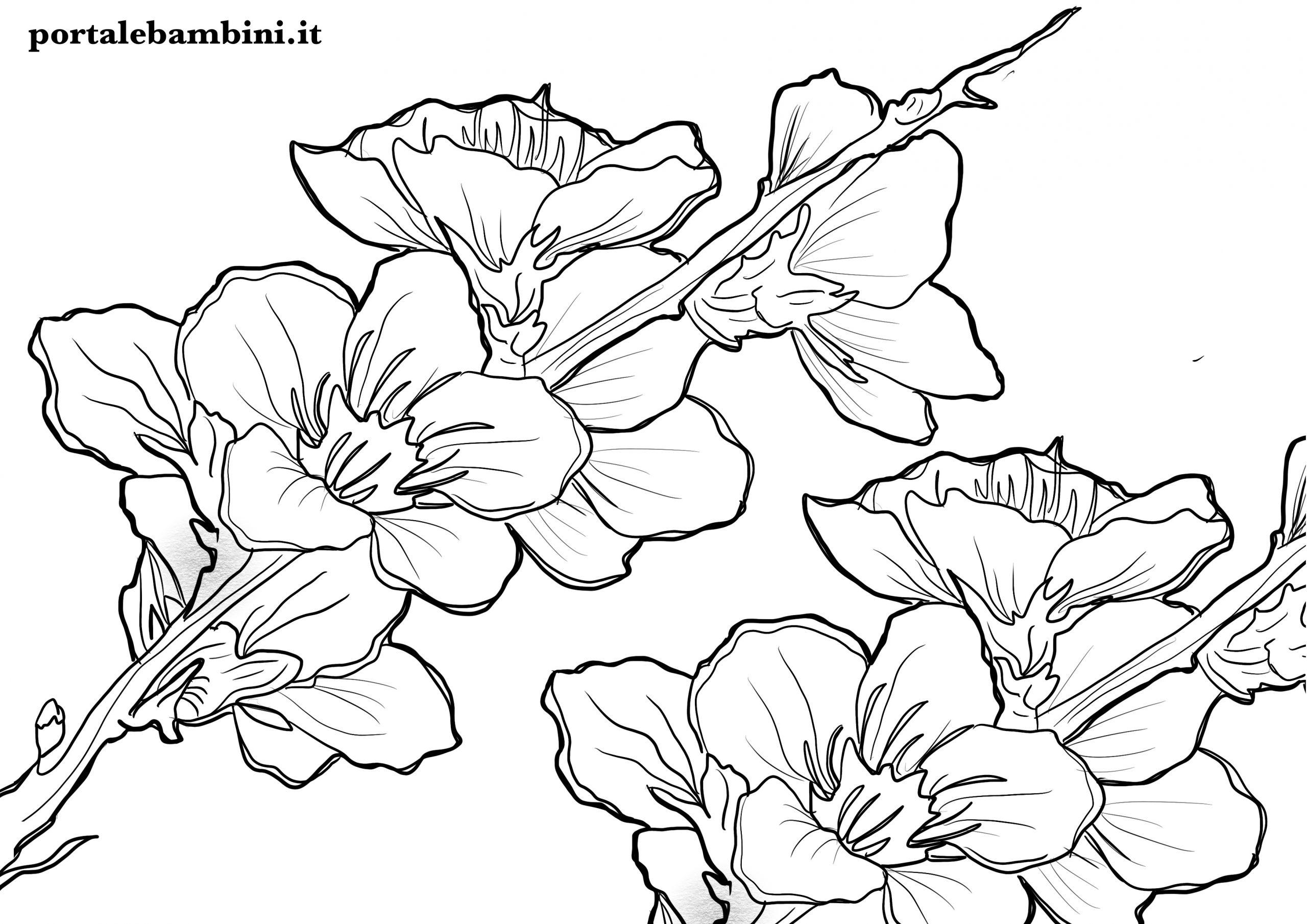 Super Disegni di Fiori da Colorare | portalebambini.it NQ01