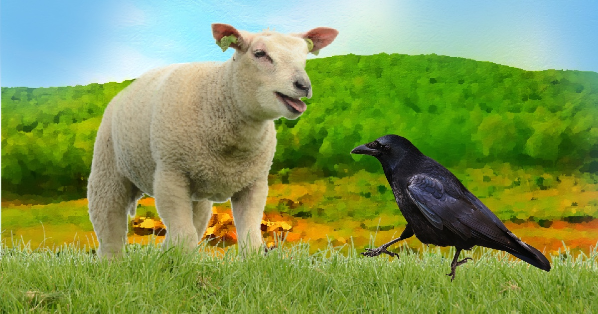 la cornacchia e la pecora