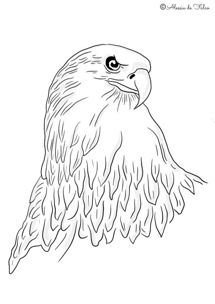 uccelli da colorare aquile