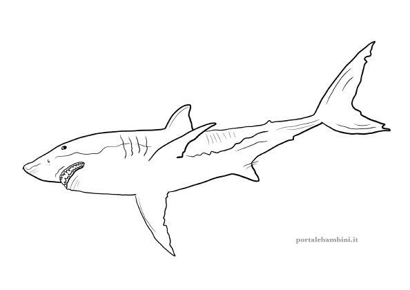 squalo da colorare