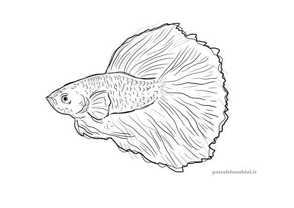 pesce combattente da colorare