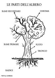 le parti dell'albero