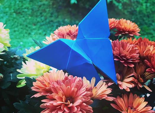 origami farfalla cover