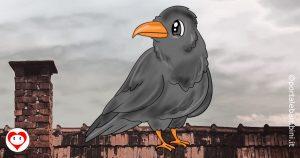 corvi da colorare