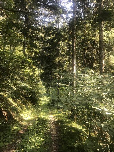 bosco montagna scuola primaria
