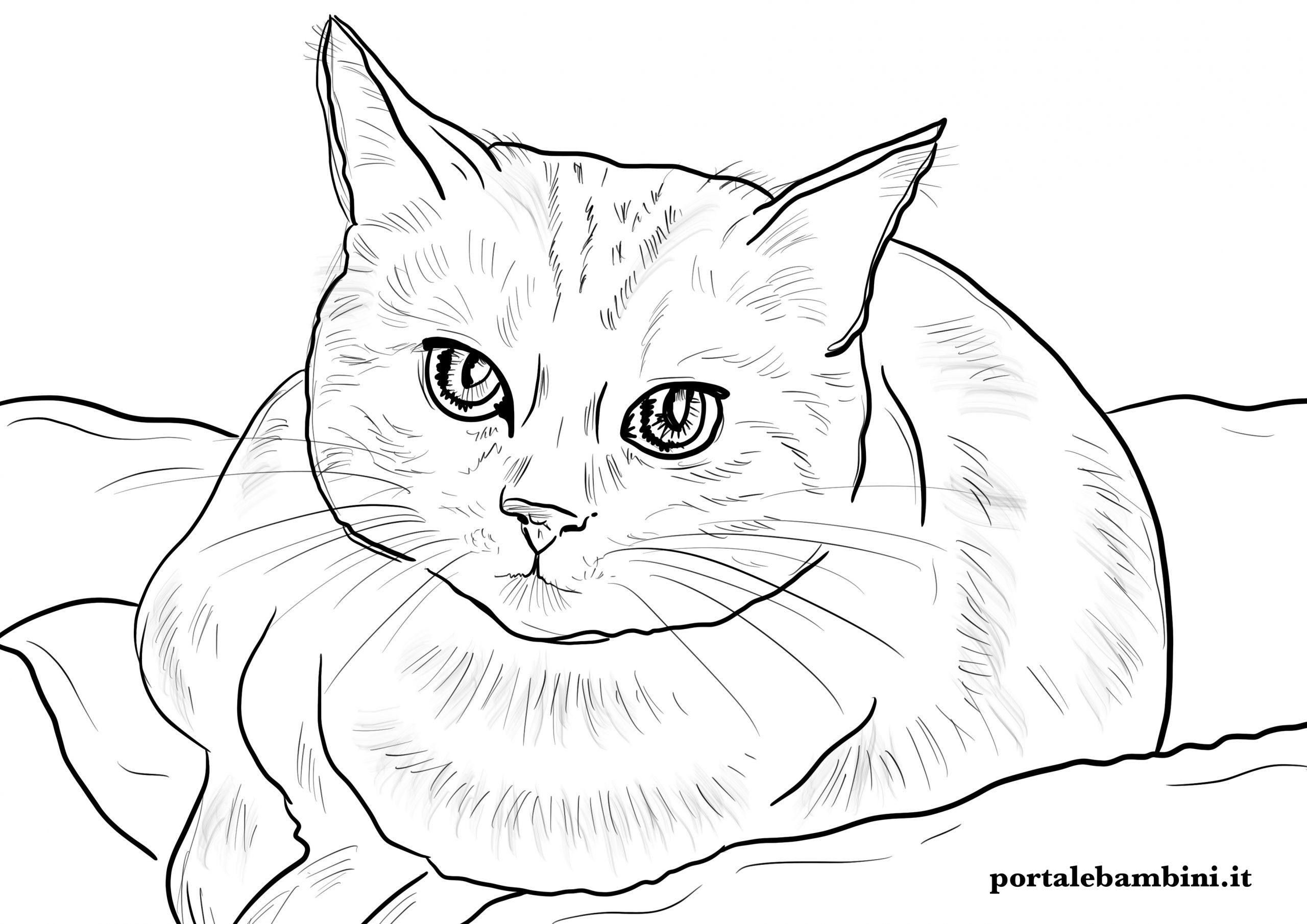 disegni di gatti da stampare e colorare per bambini