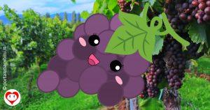 uva da colorare