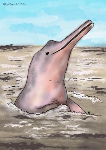 delfino rosa disegni di delfini da colorare