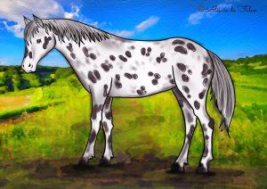 disegni di cavalli da colorare appaloosa