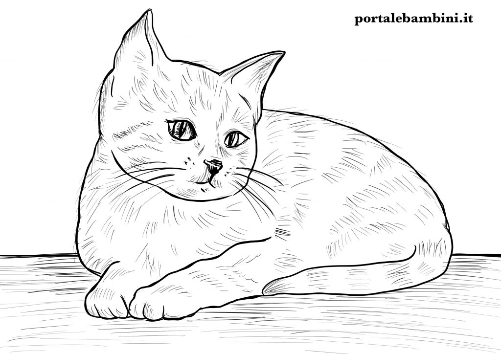 gatti da colorare 8