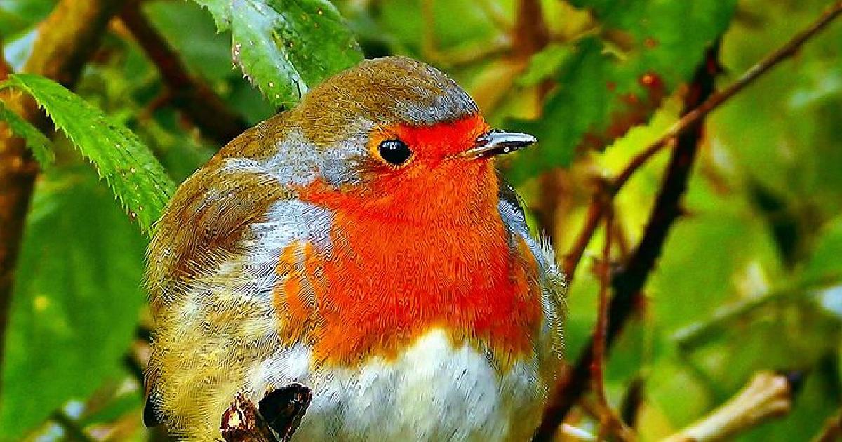 ciotola d'acqua per salvare gli uccellini