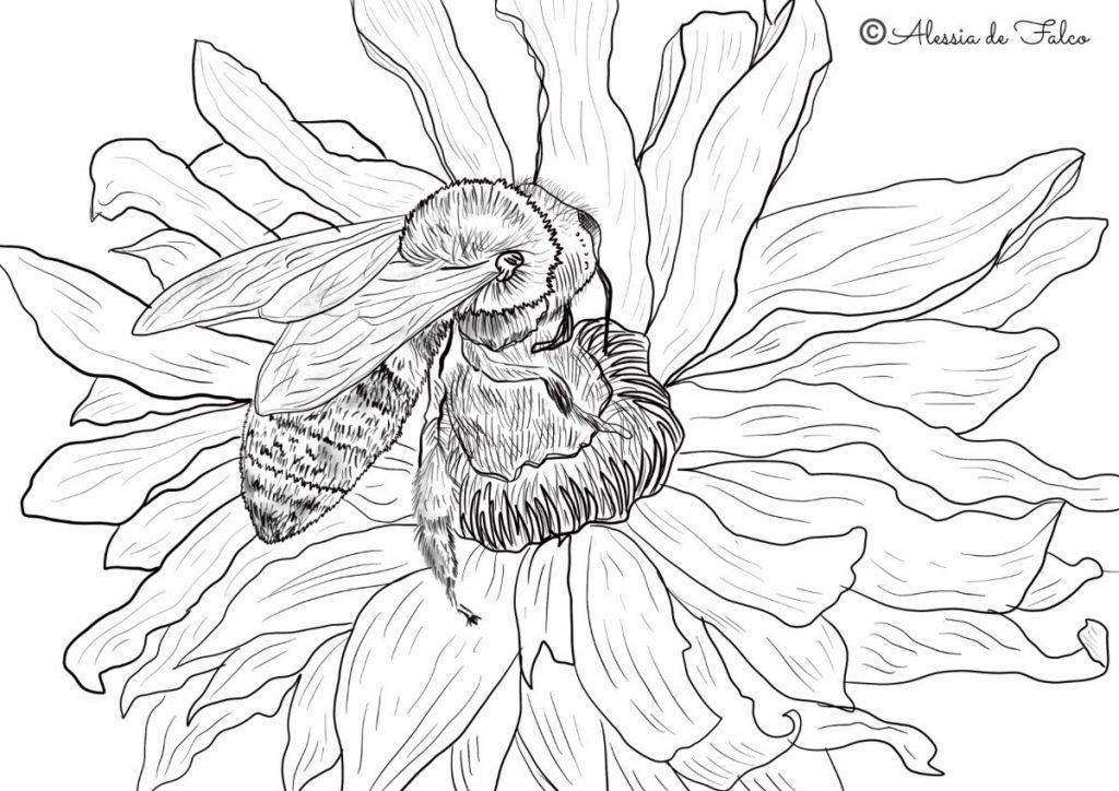 disegni ape da colorare