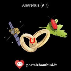 anarebus 1