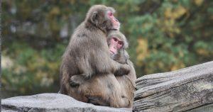 gli animali si abbracciano?