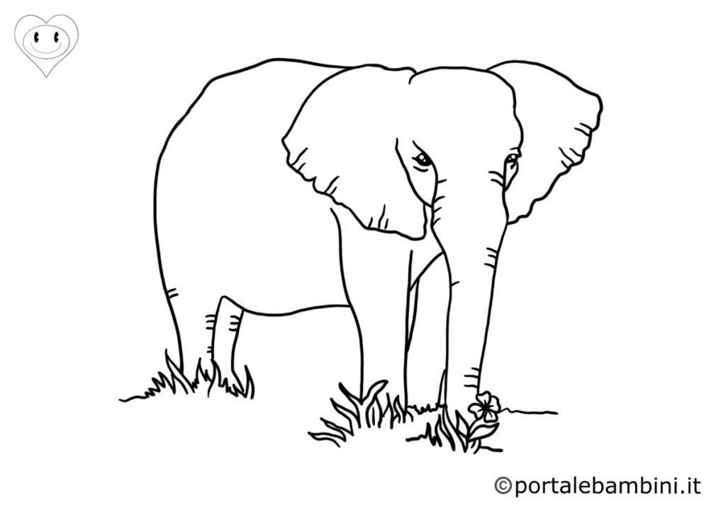 elefanti da colorare 5