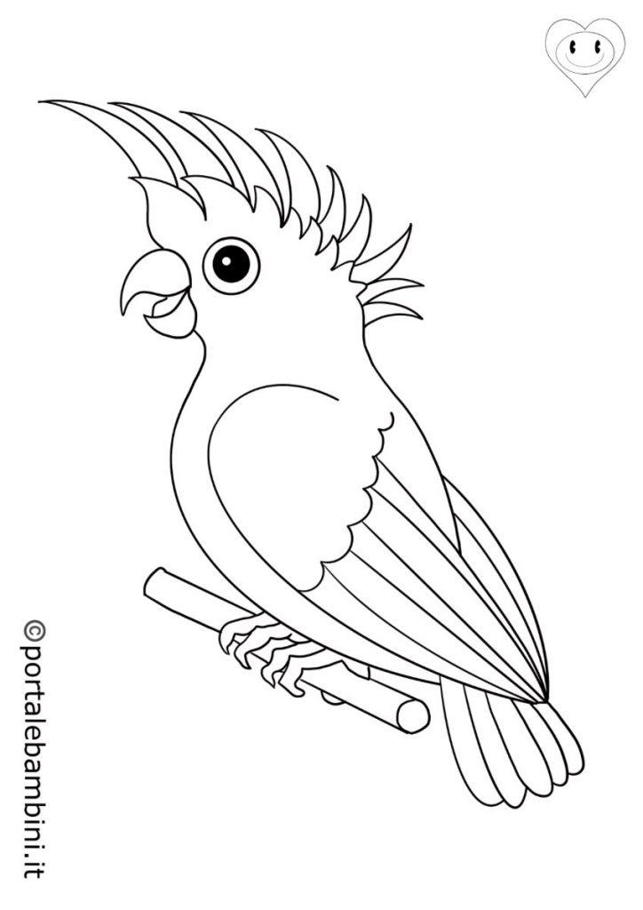 pappagalli da colorare 1