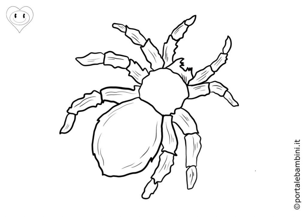 ragni da colorare 6