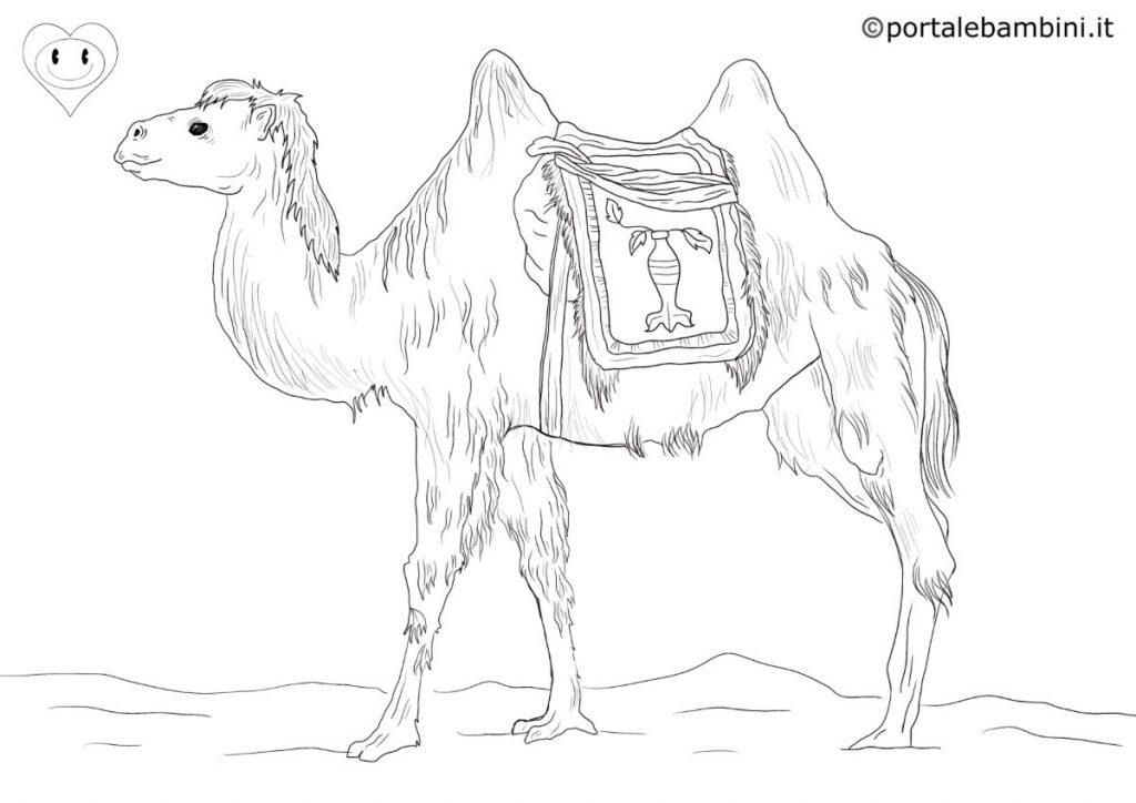 cammelli da colorare 3