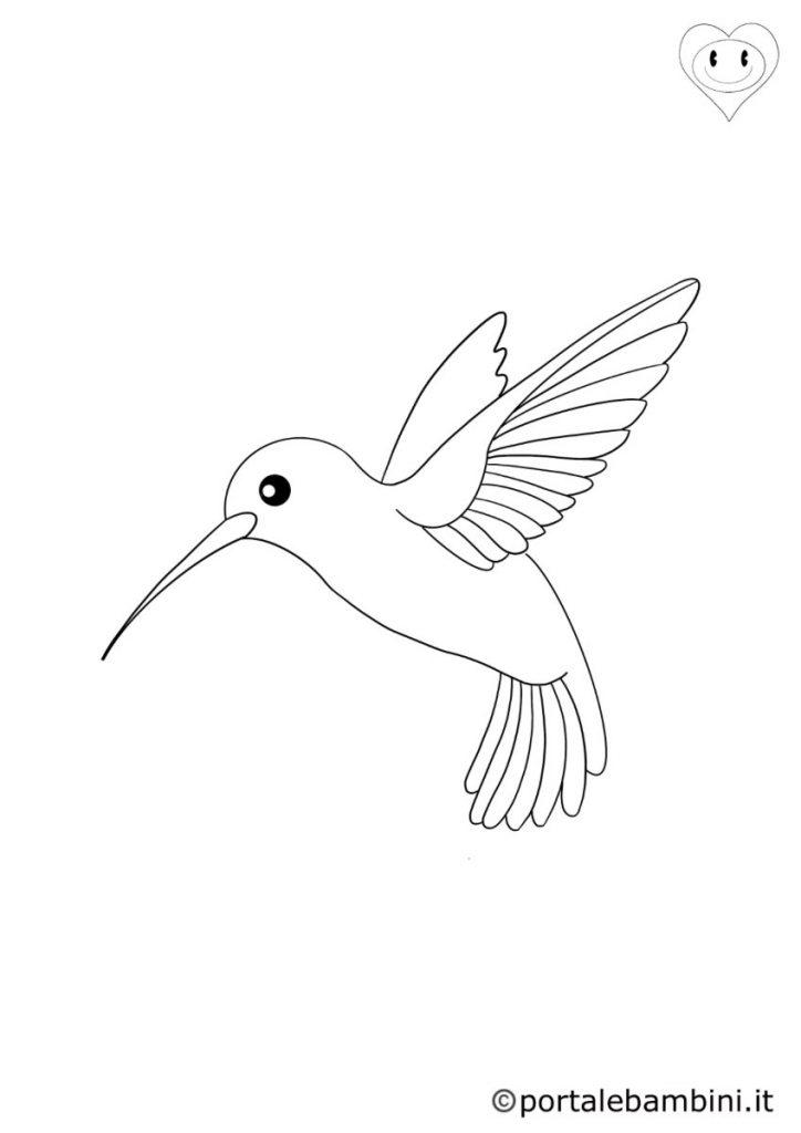 colibrì da colorare 3