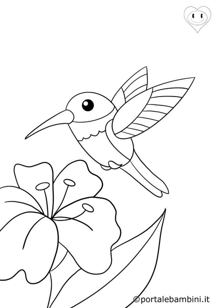 uccelli da colorare colibrì