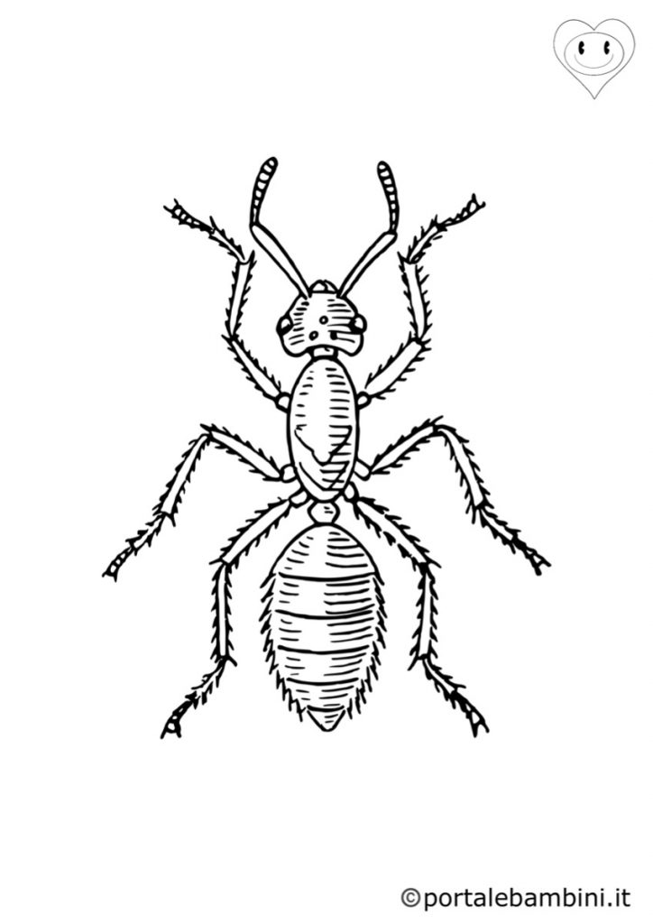 formiche da colorare 3