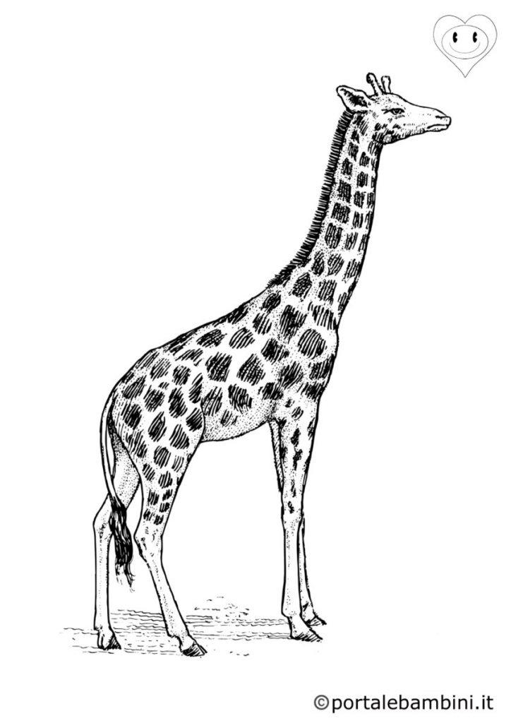 giraffe da colorare 5