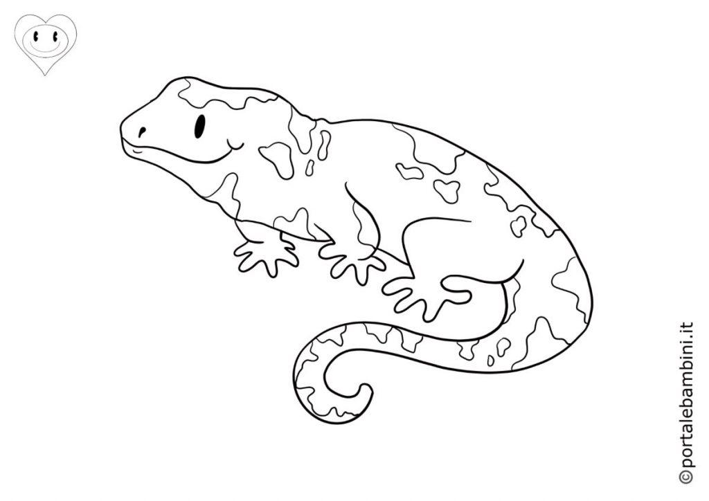 salamandre da colorare 1