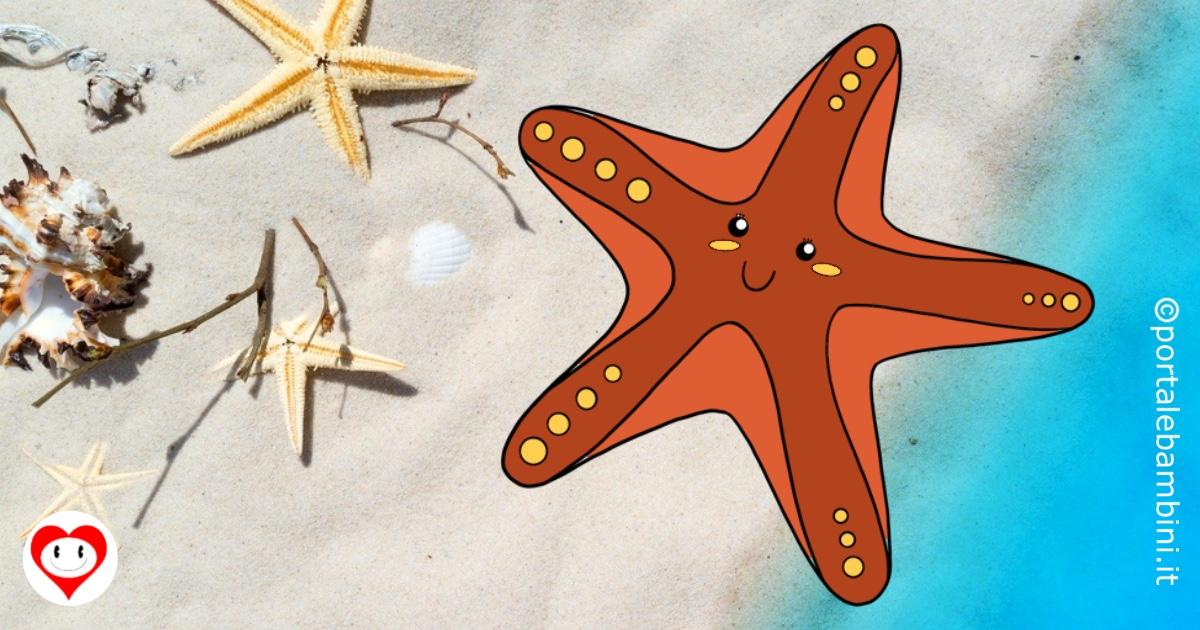 stelle marine da colorare