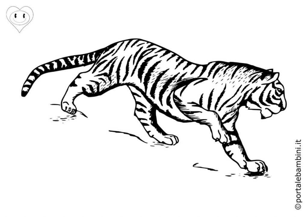 tigri da colorare 6