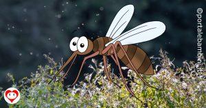 zanzare da colorare