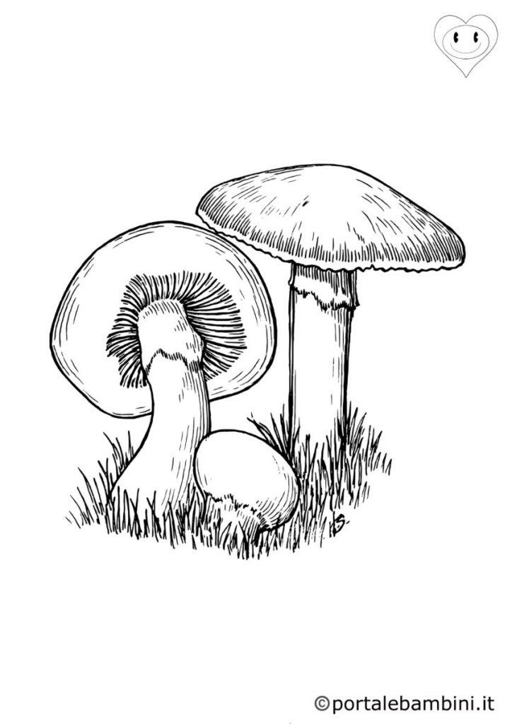 funghi da colorare 2
