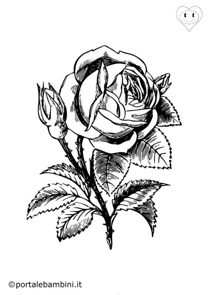 rose da colorare 3