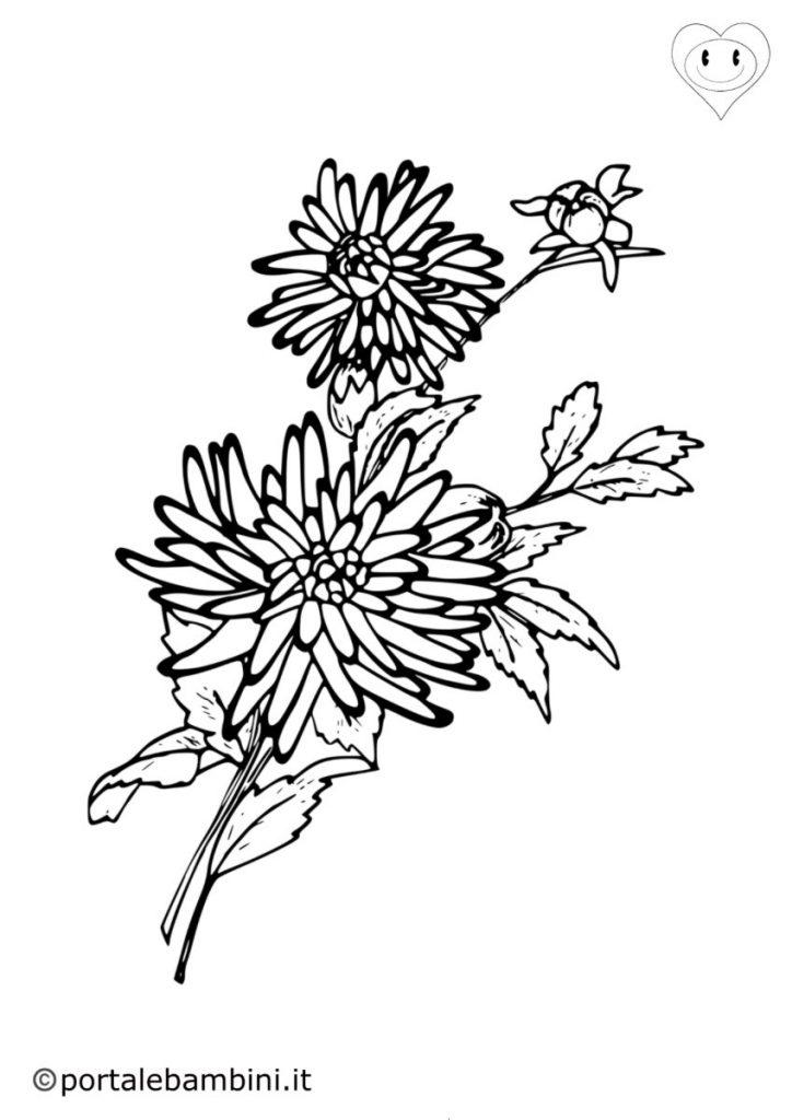 crisantemi da colorare 2