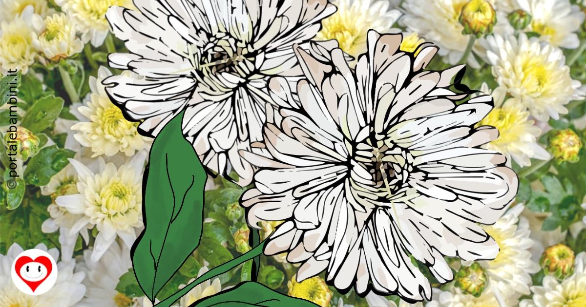 crisantemi da colorare