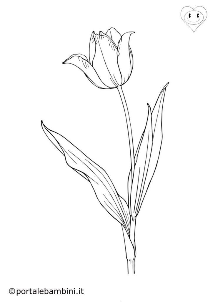tulipani da colorare 2